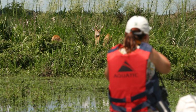 La naturaleza única de los Esteros del Iberá, Corrientes